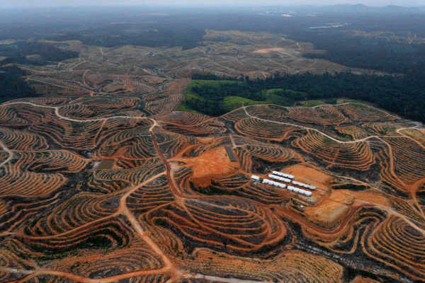 Deforestation: Humankind and the Global Ecological Crisis