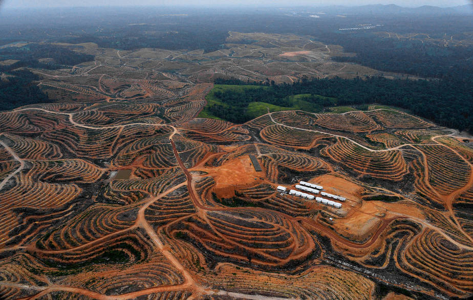 Deforestation:
